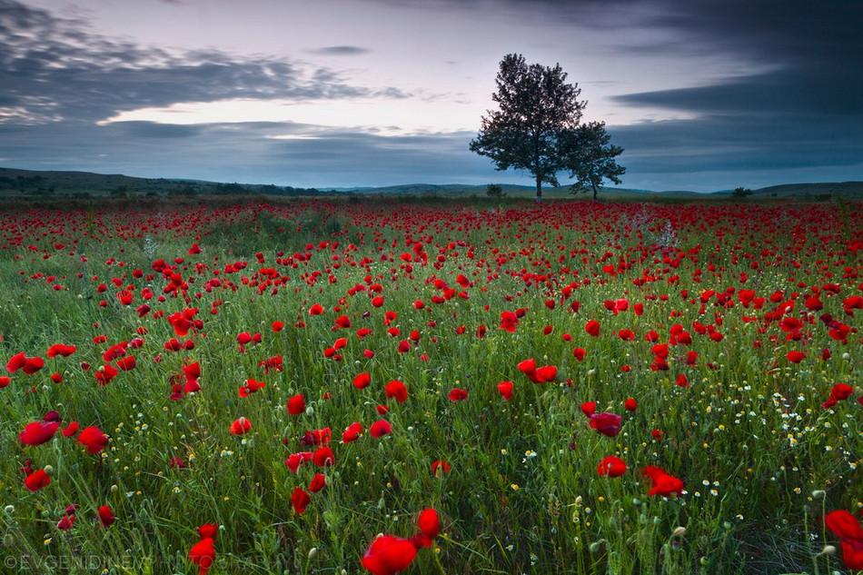 2246 Болгарские пейзажи фотографа Евгения Динева