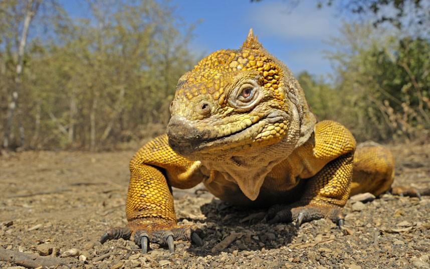 2249 Фотографии дикой природы Энди Роуса