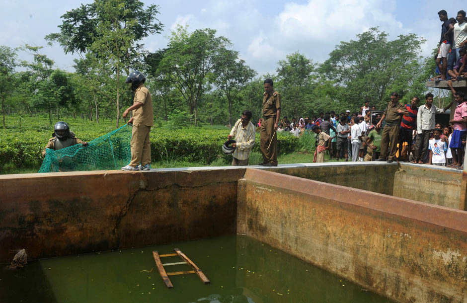2272 Осталось восемь жизней   дикий леопард спасся, упав в резервуар с водой