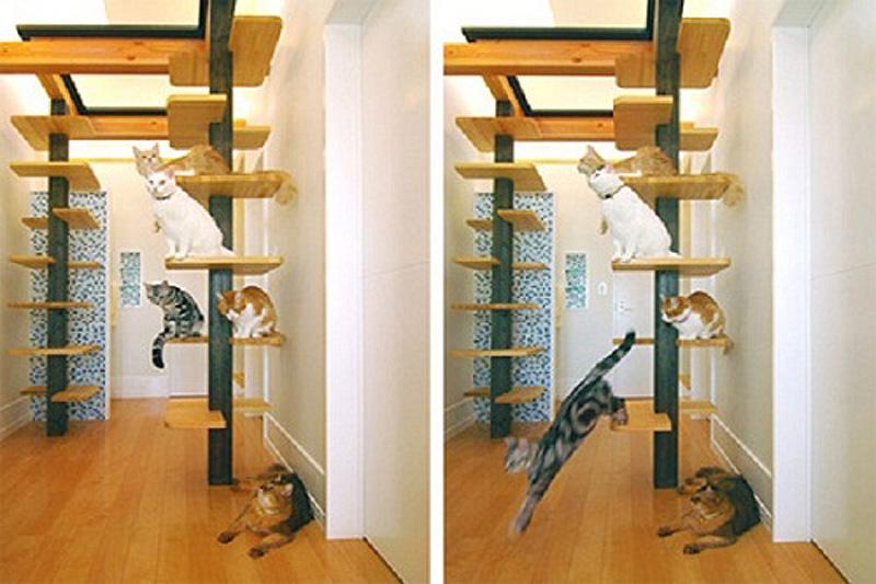 2294 Дизайн для котов