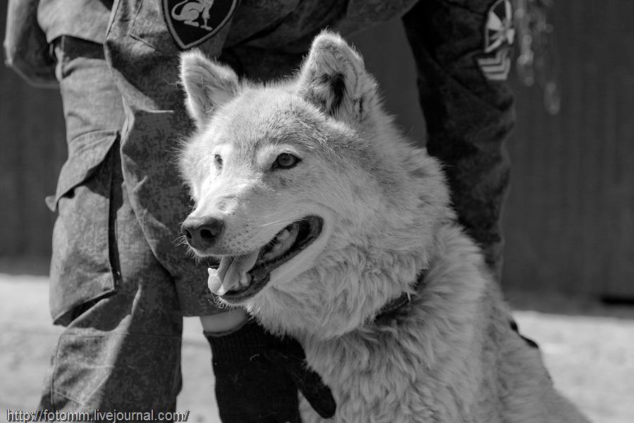 2295 Волчья кровь