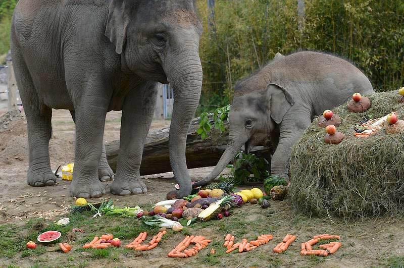 233 Такие милые слонята