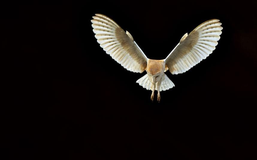 2342 Фотографии дикой природы Энди Роуса
