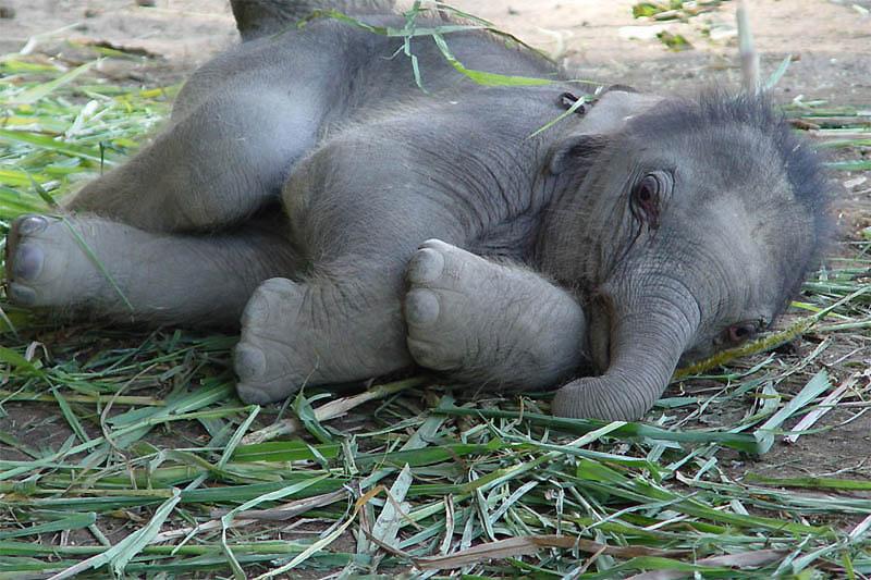 243 Такие милые слонята