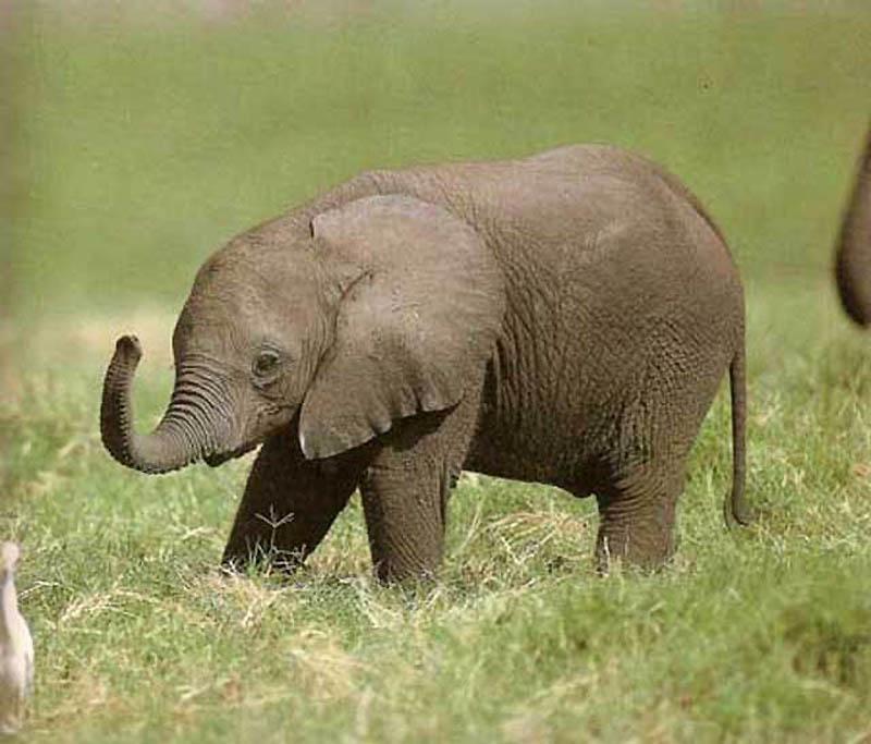 253 Такие милые слонята