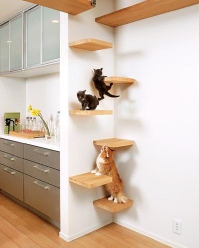 2554 Дизайн для котов