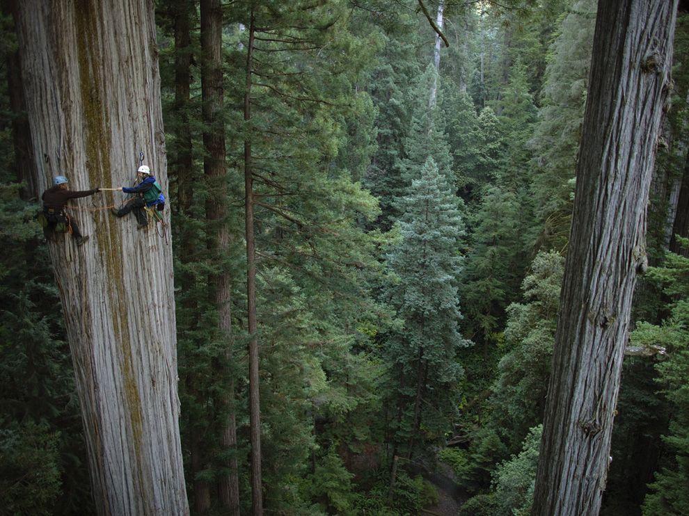 268 Обои для рабочего стола от National Geographic за май 2012