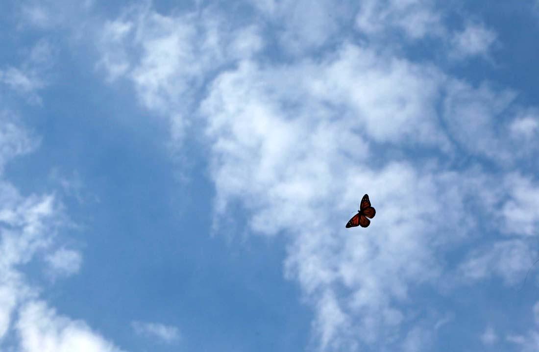 2718 Метаморфозы и рождение бабочки монарха