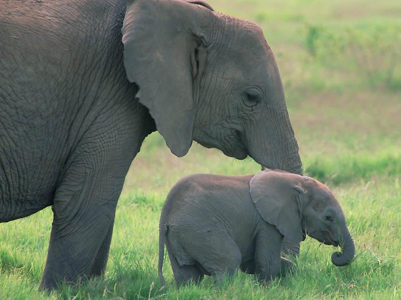 273 Такие милые слонята