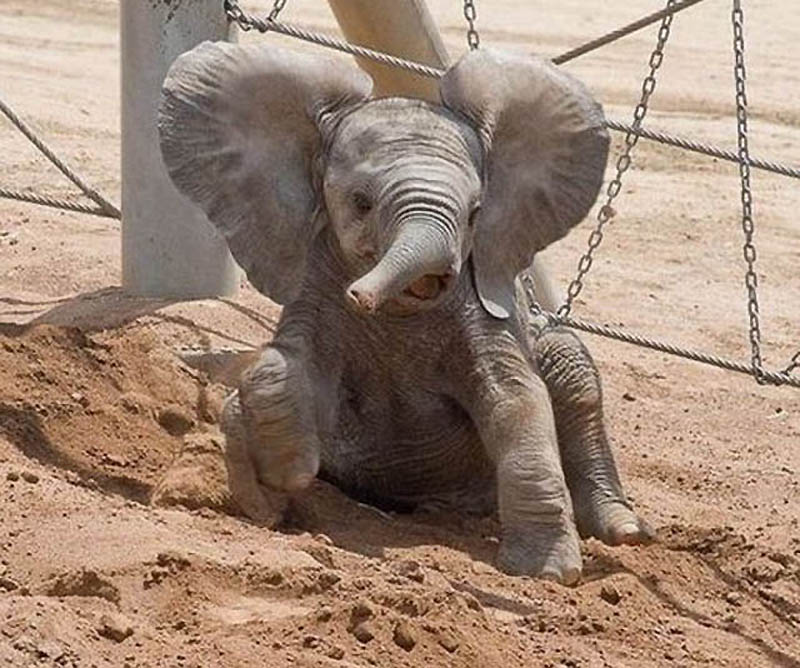 282 Такие милые слонята