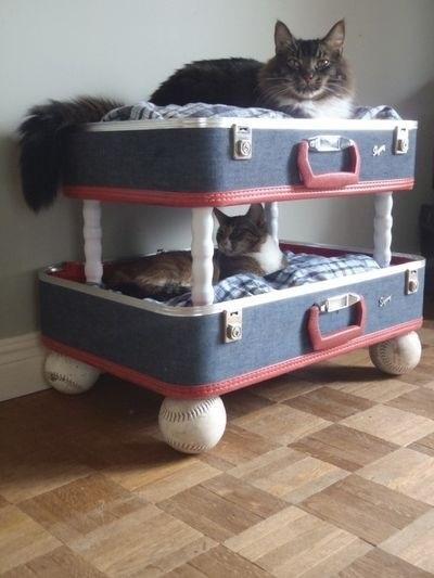 2837 Дизайн для котов