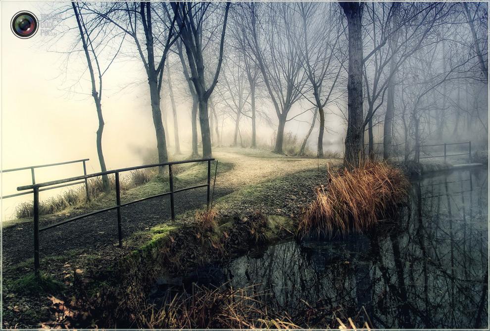 2917 Выразительные снимки венгерского фотографа Габора Дворника