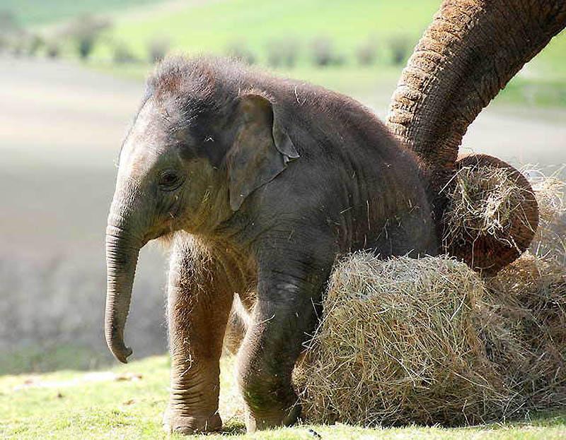 292 Такие милые слонята