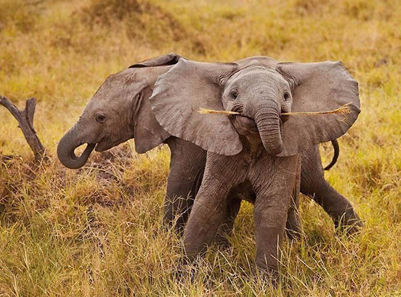 315 Такие милые слонята
