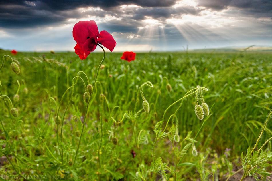 3159 Болгарские пейзажи фотографа Евгения Динева
