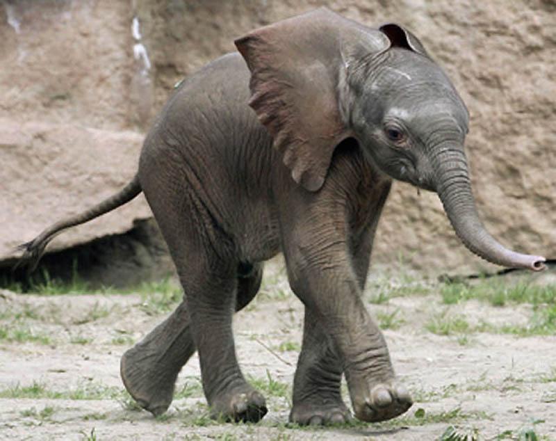 316 Такие милые слонята