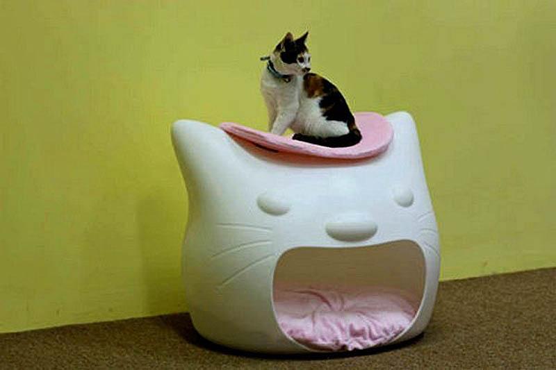 3206 Дизайн для котов