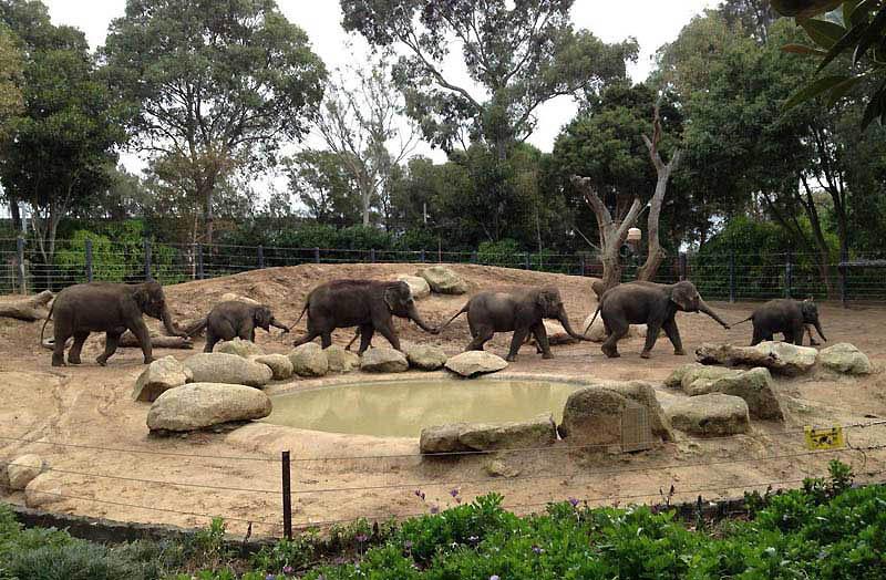 341 Такие милые слонята