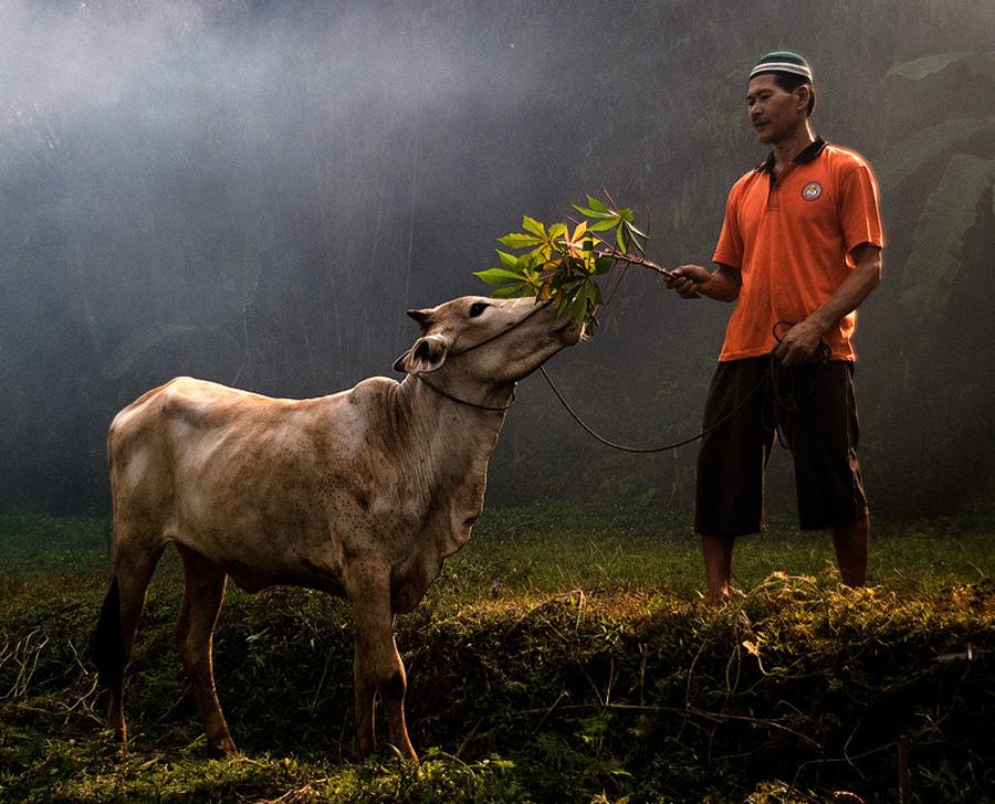 3922 Индонезийские истории фотографа Девана Иравана