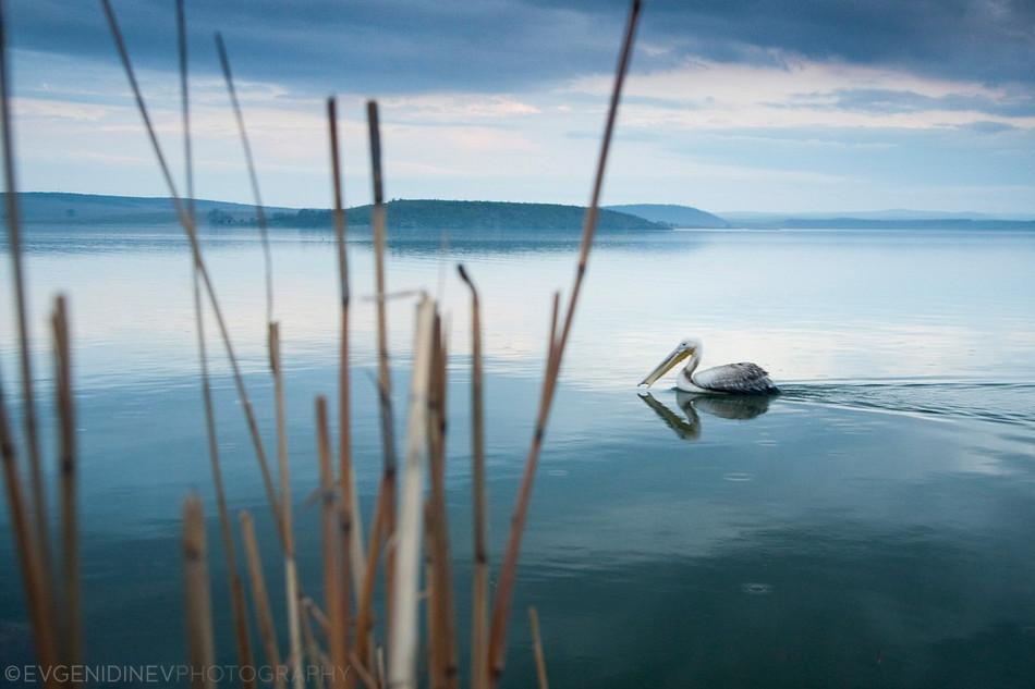 4122 Болгарские пейзажи фотографа Евгения Динева