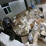 Приют для бродячих животных в Нанкине