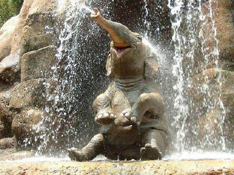 415 Такие милые слонята