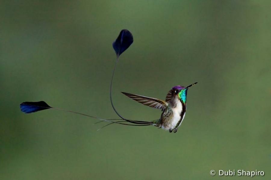 4152 Фотоконкурс World Bird 2012