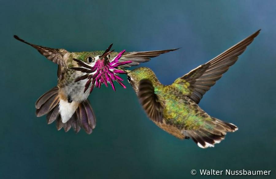 5136 Фотоконкурс World Bird 2012