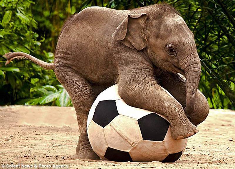 515 Такие милые слонята