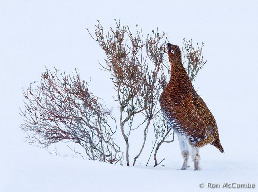 6122 Фотоконкурс World Bird 2012