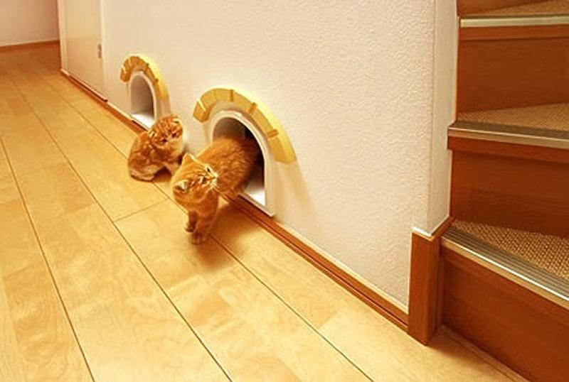 6136 Дизайн для котов