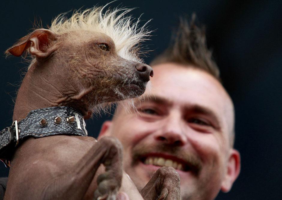6143 Конкурс на самую уродливую собаку 2012