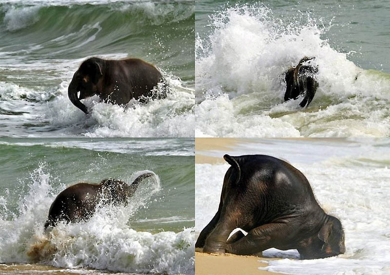 69 Такие милые слонята