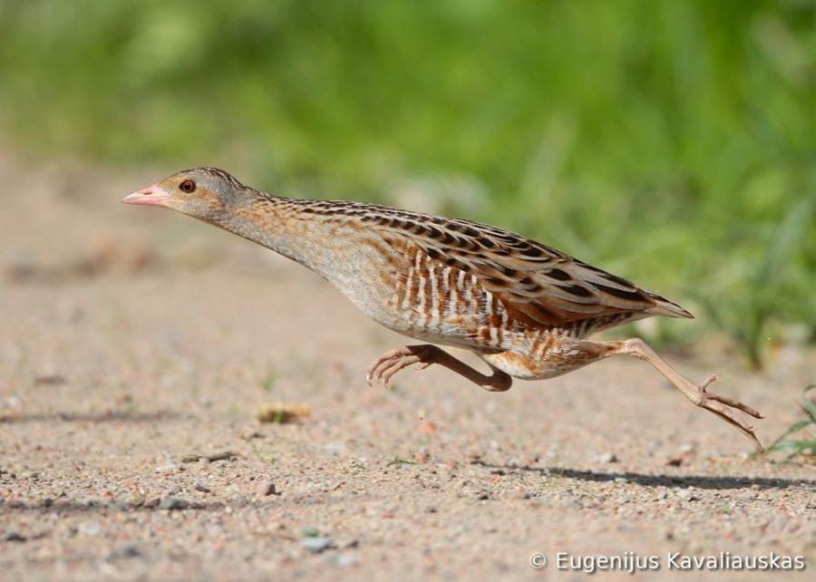 7113 Фотоконкурс World Bird 2012