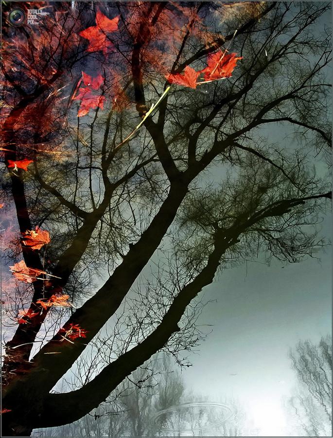 753 Выразительные снимки венгерского фотографа Габора Дворника