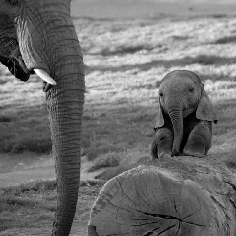 77 Такие милые слонята