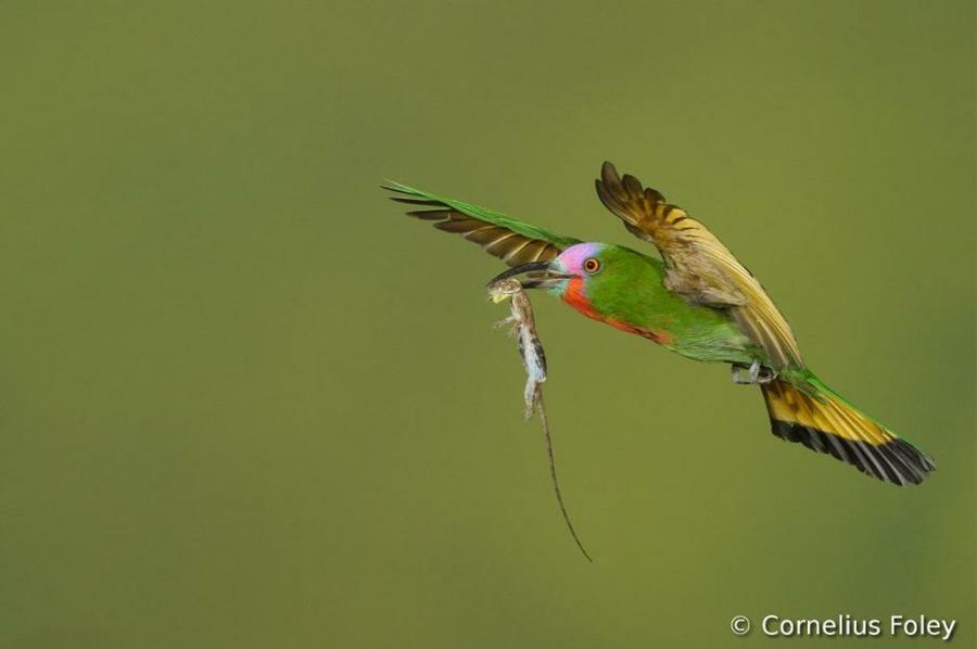 8105 Фотоконкурс World Bird 2012