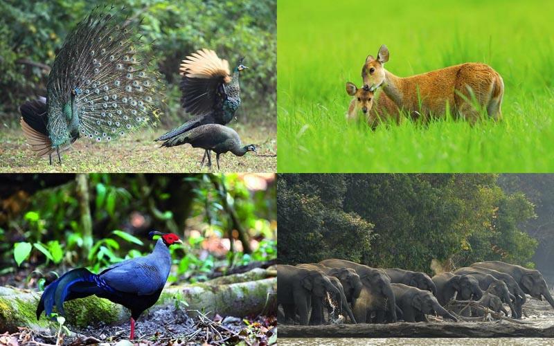 BIGPIC46 Тайский заповедник дикой природы Phu Khieo