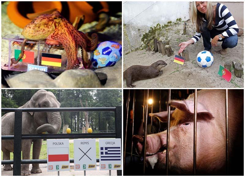 BIGPIC9 Евро 2012: Кто станет преемником осьминога Пауля?