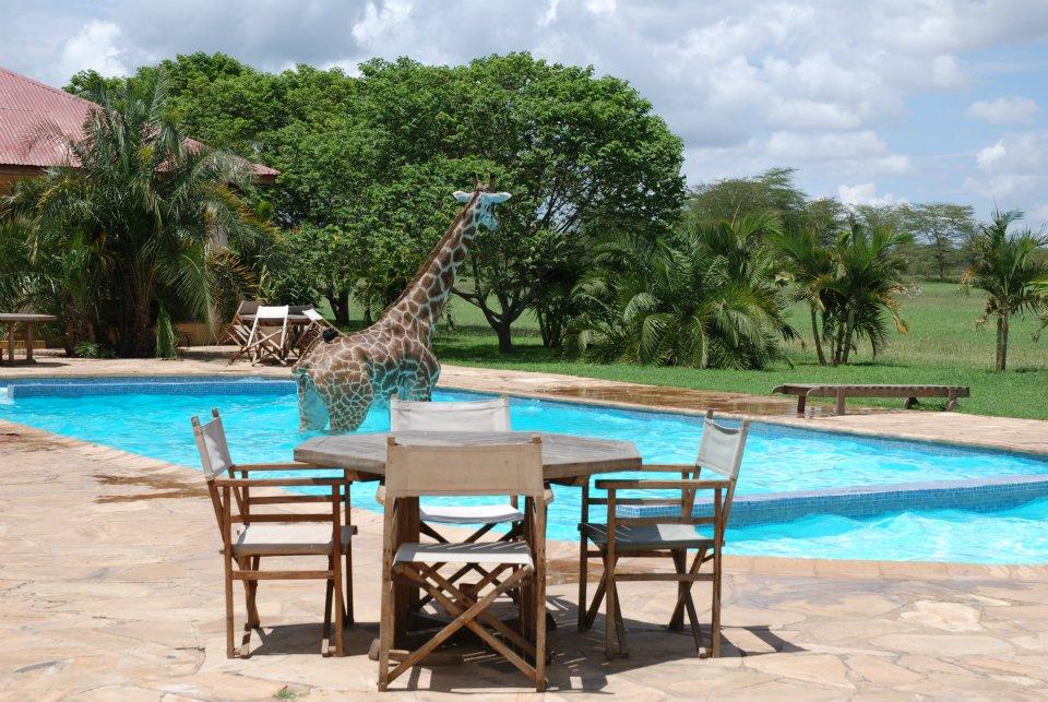 OxtRQ Жираф искупался в бассейне