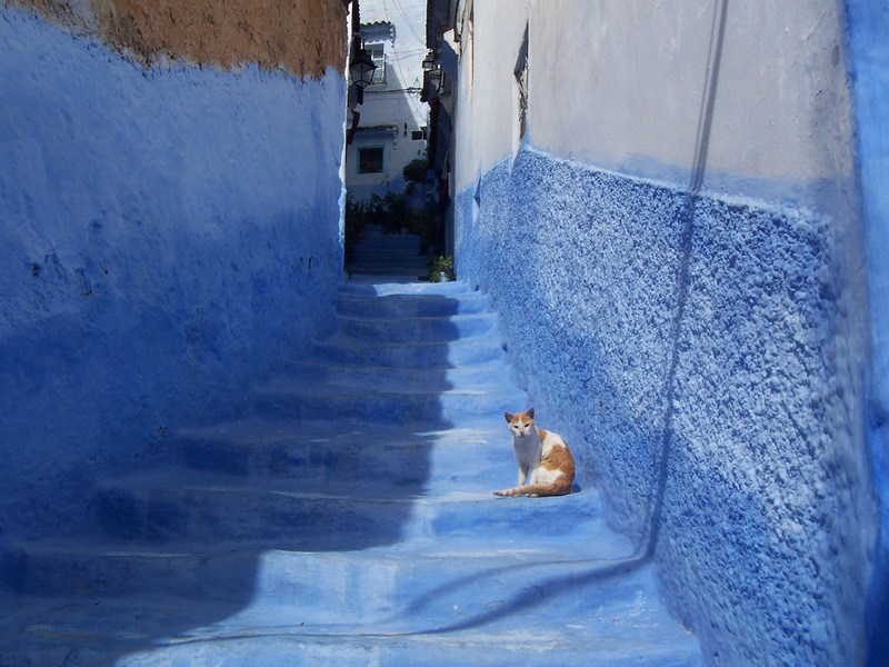 blue 11 Голубой город Шефшауен