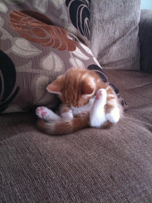 cats 1 25 кошачьих поз для сна