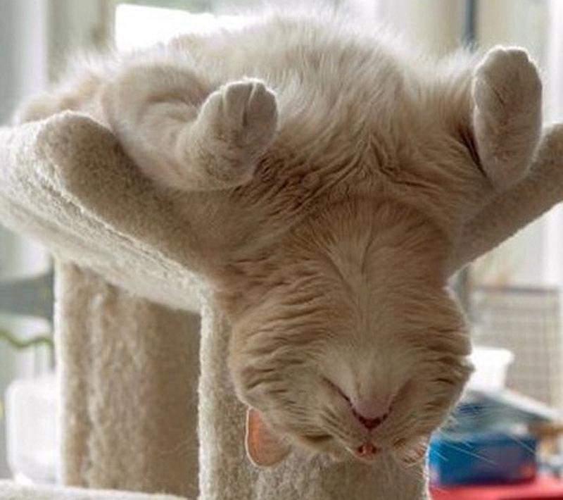 cats 18 25 кошачьих поз для сна