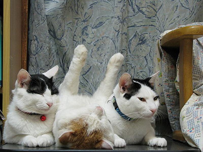 cats 19 25 кошачьих поз для сна