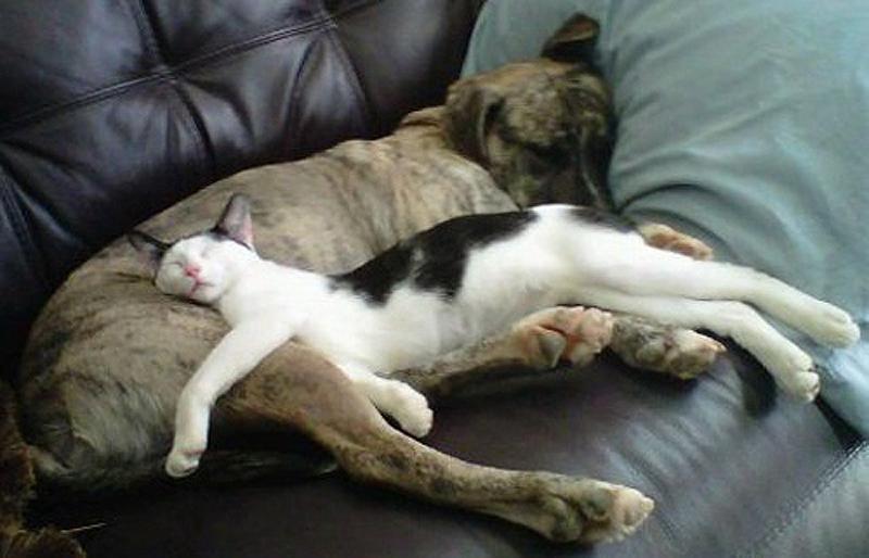 кошачьи позы для сна