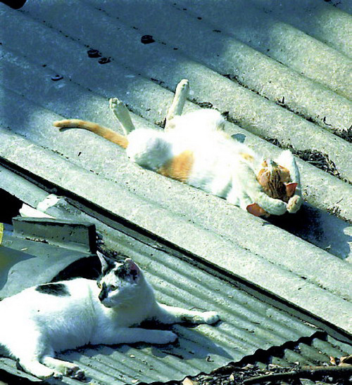 cats 4 25 кошачьих поз для сна