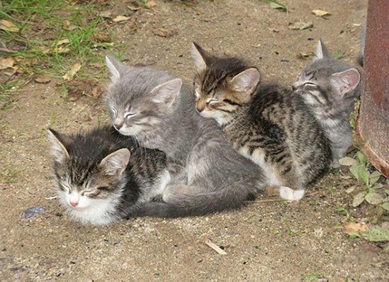 cats 9 25 кошачьих поз для сна