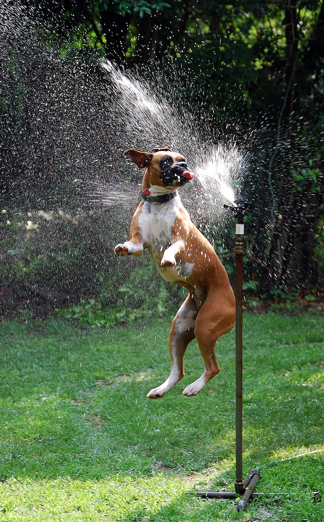 doggywater01 Радостная битва: собаки против брызг
