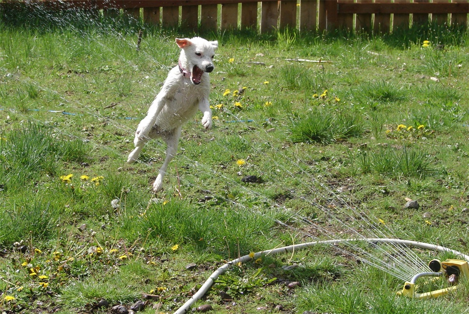 doggywater03 Радостная битва: собаки против брызг