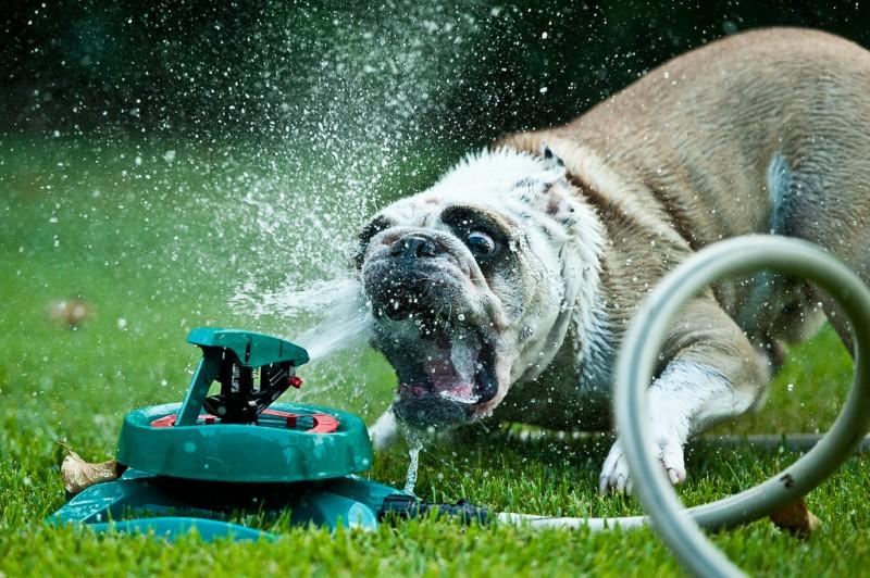 Радостная битва: собаки против брызг